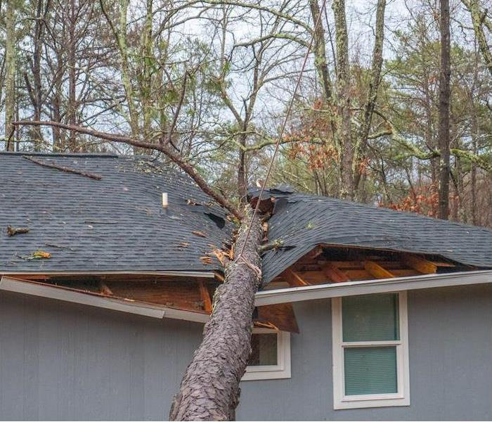 severe roof damage from a large tree landing on gray house