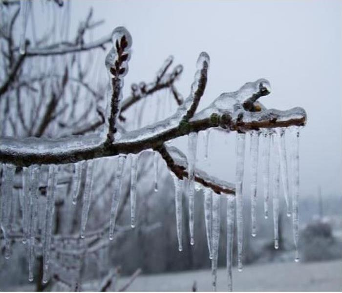 Icicles begin to form on a branch